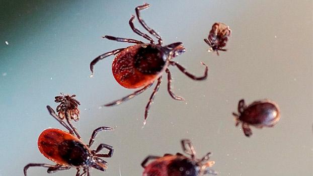 Более 10 тысяч жителей Вологодской области пострадали от укусов клещей